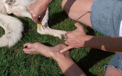 Myggestik, kløe – hund og menneske