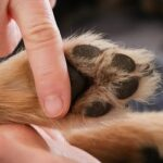 zoneterapi til hunde